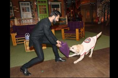 شو میں شاہد ایک کتے کے ساتھ كھیلتے ہوئے بھی نظر آئے۔