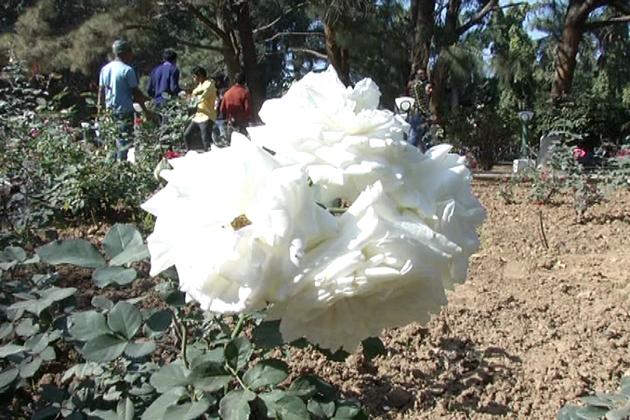 گورنر ہاؤس کے احاطے میں دل کو بیحد خوشی کا احساس دلانے والے پھولوں کے باغات ہیں۔