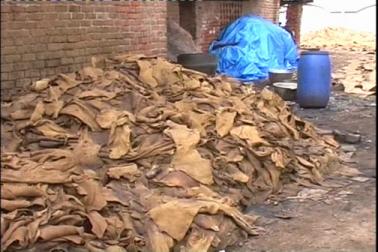 کانپور کے چمڑوں کی مانگ پوری دنیاں بھر کافی زیادہ  ہے۔