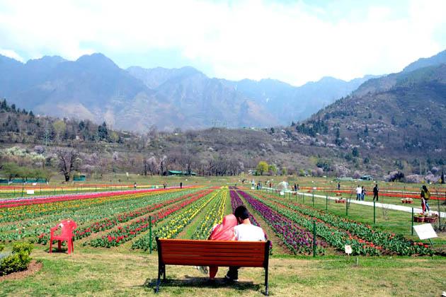 ریاستی محکمہ سیاحت کے سکریٹری فاروق شاہ نے کہا کہ اس باغ میں 'بہارِ کشمیر' کے تحت ایک 15 روزہ 'گل لالہ فیسٹول'کا آغاز بھی ہوگیا ہے۔