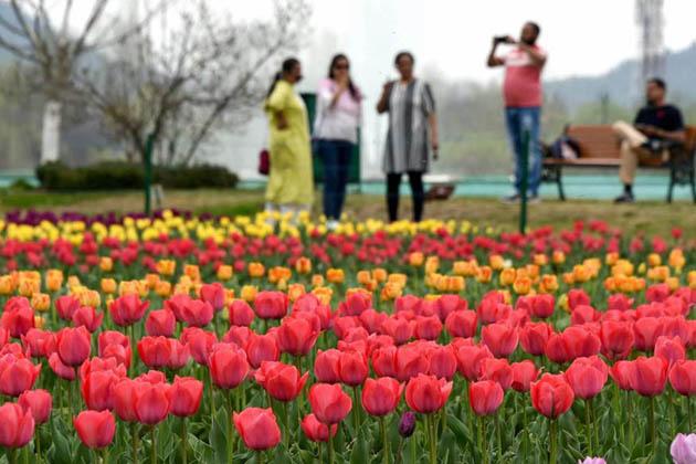 باغ گل لالہ میں سرخ، پیلے ، سنتری، جامنی، سفید، گلابی، طوطے ، پیلے، دو رنگی اور سہ رنگی پھولوں نے پہلے ہی چاروں اطراف دھنک کے رنگوں کے دلکش نظارے بکھیردیے ہیں'۔