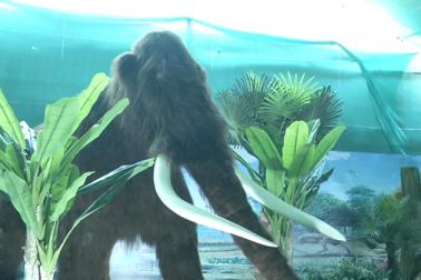اسپنج اورسلیکان پیسٹ کے استعمال سے جانوروں کو تیار کیا گیا ہے ۔