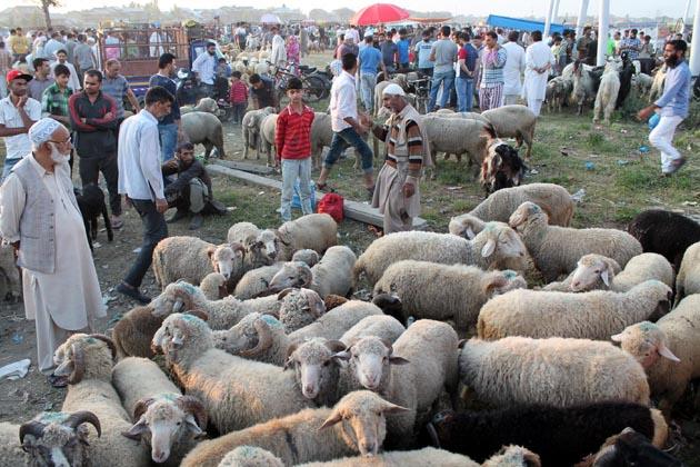 جموں و کشمیر میں بھی بکرا بازار پوری طرح سج چکا ہے ۔
