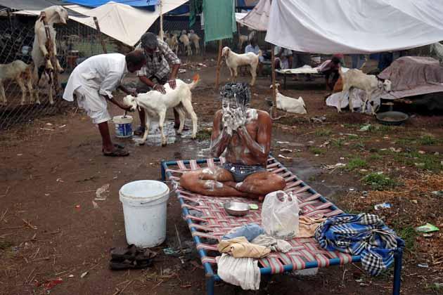 احمد آباد میں مویشی بازار کا ایک منظر