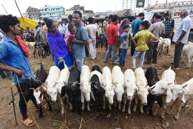پٹنہ میں بکرا بازار میں لوگوں کی کافی بھیڑ نظر آرہی ہے۔