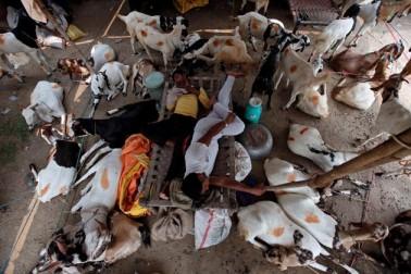دہلی میں بھی بکرا بازار پوری طرح سے سج چکا ہے۔