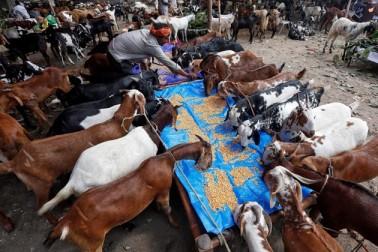 کولکاتہ میں بکرا بازار کا ایک منظر