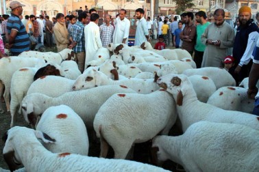 تاریخی عید گاہ، پارمپورہ اور نمائش گاہ کے نزدیک شہریوں کی بڑی تعداد قربانی کے جانور خریدنے میں مصروف ہے۔