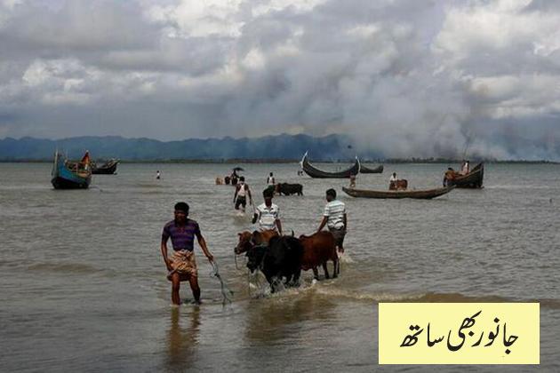 بنگلہ دیش میں نقل مکانی کر کے آنے والے بعض روہنگیا افراد اپنے جانوروں کو ساتھ لانا نہیں بھولے۔ ایسی صورت میں یہ مہاجرین نف دریا کا راستہ اختیار کرتے ہیں۔