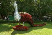 بنگلورو کےلال باغ میں فلاور شو کا آغاز ، ہرطرف رنگ برنگے پھولوں کا دلکش ن
