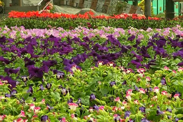یوم جمہوریہ کے موقع پر ہر سال کی طرح اس سال بھی بنگلورو کے لال باغ میں فلاور شو کا آج سے آغاز ہوا ـ۔
