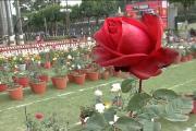 تصاویر :نوابوں کی نگری بھوپال میں دور روزہ گلاب نمائش ، دیکھنے کیلئے