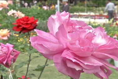 گلاب نمائش کا انعقاد حالانکہ دو روزکے لئے کیا گیا ہے ، لیکن شائقین چاہتے ہیں کہ اس کی مدت میں اضافہ کردیا جائے تاکہ وہ زیادہ دنوں تک گلابوں کی دلکشی سے اپنی یادوں کو معطر کر سکیں۔