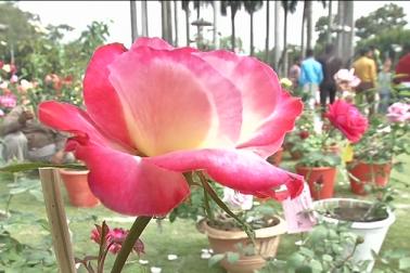 نوابوں کی نگری بھوپال میں دور روزہ گلاب نمائش ، دیکھنے کیلئے امڈ پڑا ہجوم