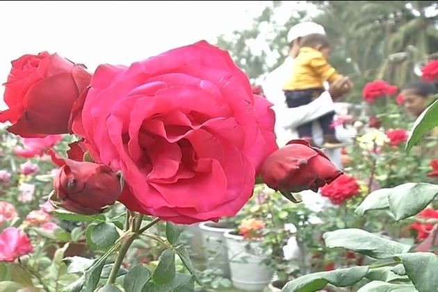 یوں تو کرہ ارض پر قدرت نے کتنے اقسام کے پھول کھلائے ہیں  یہ کسی کو نہیں معلوم ہے ، لیکن پھولوں کی جو اقسام لوگوں کو معلوم ہیں ان میں گلاب کو پھولوں کا راجا تسلیم کیا گیا ہے۔