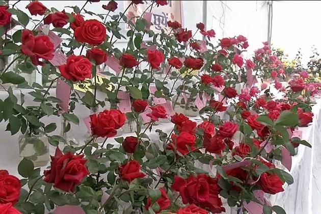 بھوپال میں گلاب نمائش کا انعقاد 1979 سے کیا جا رہا ہے ۔