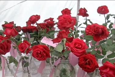 گلاب نمائش میں اس سال گلاب کی 400 اقسام کو پیش کیا گیا ہے۔