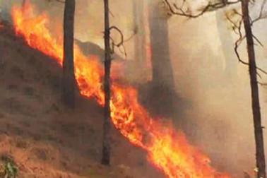 ویشنو دیوی تریکوٹا کے جنگ میں نہیں بجھی آگ،یاترا پر لگائی گئی روک