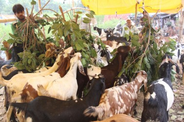 قومی راجدھانی دہلی میں بکرا بازار کی رونق