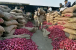 مہاراشٹر : 2657 کلو پیاز بیچ کر کسان نے کمائے صرف چھ روپے ، وزیر اعلی کو بھیجا